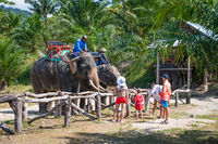Elephants and their trainers in a tropical camp
