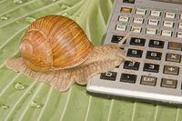 Mathe Schnecke / Math snail
