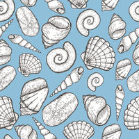 Seashell collection hand drawn aquatic doodle illustration. Sketch.
