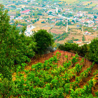Monastery vineyard in Meteora