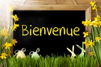 Sunny Narcissus, Easter Egg, Bunny, Bienvenue Means Welcome