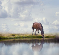 Brown horse near water