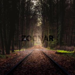 Schienen durch den Wald