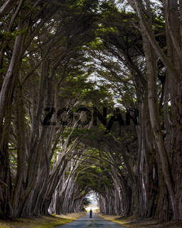 Point Reyes tree tunnel