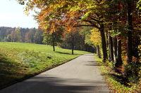 Strße mit Herbstwald