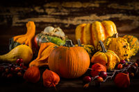 Assorted pumpkins for Thanksgiving and Halloween in warm colors