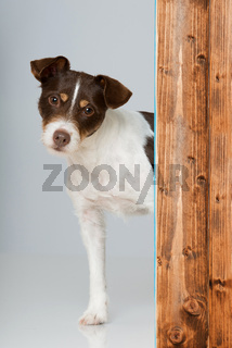 Hund sieht ums Eck