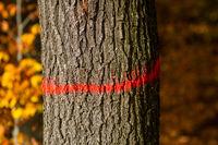 Forstwirtschaft Kennzeichung Baum
