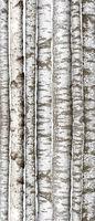 Verschiedene Birkenstämme, isoliert auf weißem hintergrund