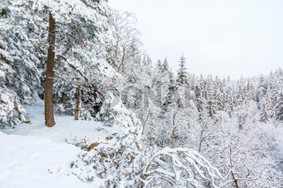 Rock shelf with trees in winter forest