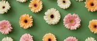 Flower pattern of different colorful gerberas isolated on green