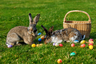 happy easter bunny with eggs