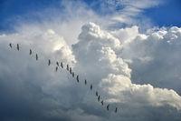 Zugvögel fliegen nach Süden