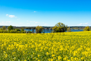 Canola fields in Mecklenburg, Germany