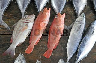 Red Snapper und Thunfische, Fischmarkt in Galle, Sri Lanka, Ceylon, Asien
