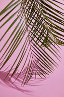 Green leaves on pink background