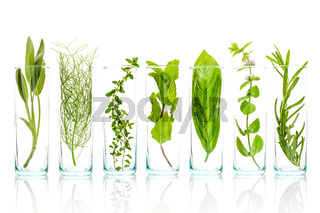Close Up bottles of fresh aromatic herbs . Sage, rosemary, sweet basil leaves ,fennel ,green mint ,lemon thyme and peppermint branch isolated on white background.