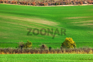 Famous moravian fields - Czech Republic