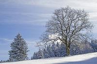 Laubbaum mit Winterlandschaft