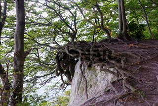 ancient beech forest, ruegen