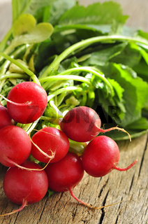 Fresh organic radishes with leaves