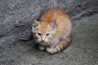 Homeless white-red kitten sitting on a concrete surface near the steps near the basement.