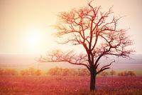 dead tree and sunrise