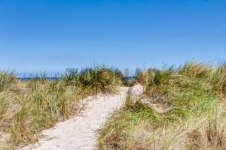 Dünengras am Sandstrand im Sommer