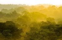 Jungle Sunset Treetops