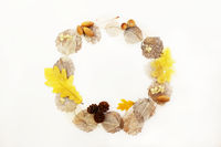 round frame of skeletonized aspen leaves, ficus and oak, cones and acorns on a white background.