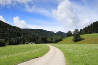 Straße in Naturlandschaft mit Alm