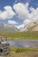 Alpenampfer im Montblancgebiet