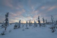 Winterlandschaft, Muddus, Lappland
