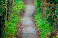 Green pathway in a park