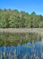 Biotop im Schwalm-Nette Naturpark,Niederrhein,Rheinland,NRW,Deutschland