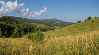 Beautiful summer panorama of lush vegetation in Altai Mountains
