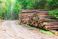 Timber stack by the road in the forest
