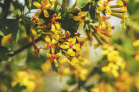 Spring background art with yellow blossom