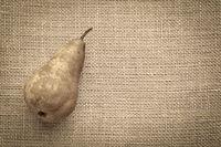 bosc pear on burlap canvas