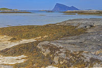 Seaweed On The Beach At Sommaroy Island, Tromso, Norway