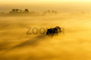 Tree on a foggy field at dawn