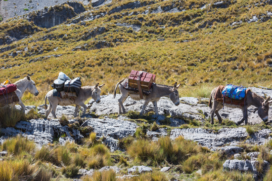 Caravan in Cordillera