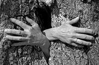 Geisterhände aus einem Baum wachsend