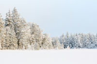 Wintry Landscape View at a forest with new snow and frost