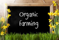 Sunny Spring Narcissus, Chalkboard, Text Organic Farming