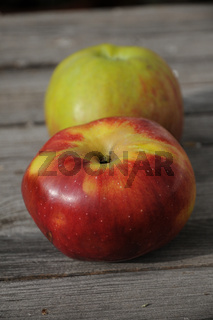 Malus domestica Winterrambur, Apfel, Apple