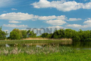 Beautiful spring landscape with small pond.
