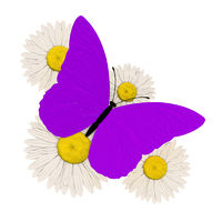 purple butterfly with four chamomile