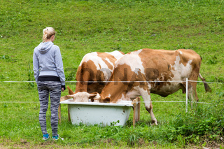 Active sporty female hiker observing and caressing pasturing cows on meadow.