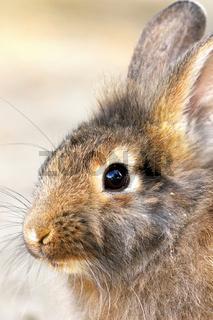 cute portrait of a domestic rabbit